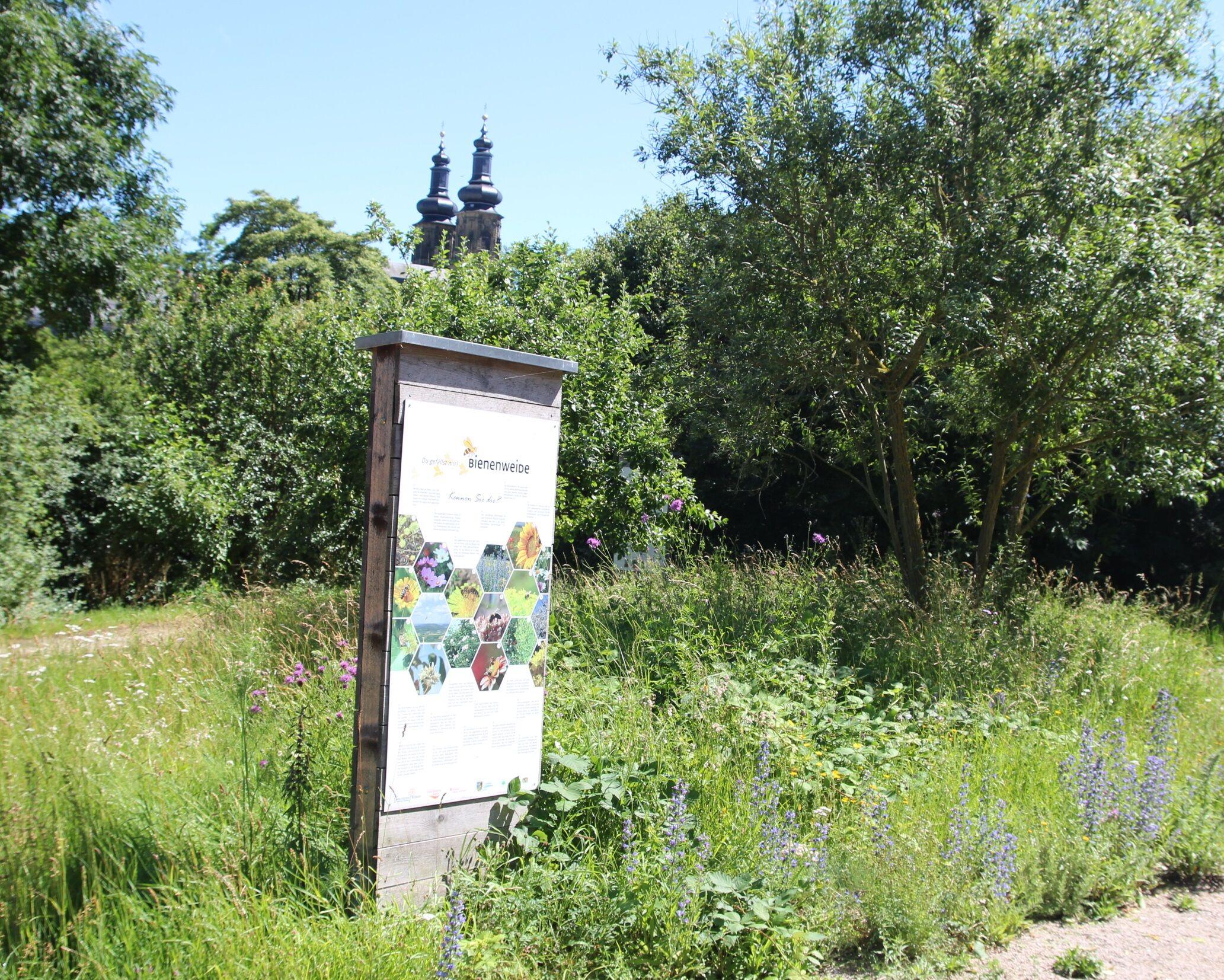 Einblick ins Bienenvolk gibt es bei der Führung am Schaubienenstand in Kloster Banz. (Foto: Umweltstation Weismain)