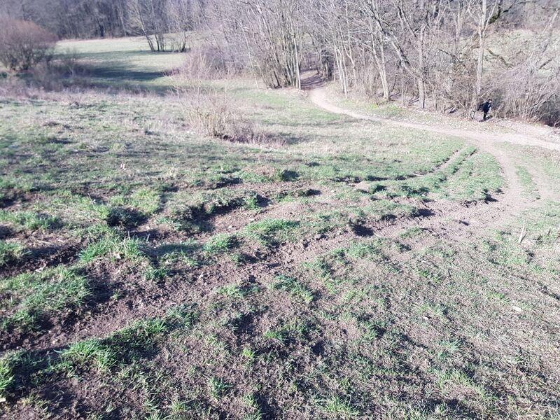 Häufiges Befahren zerstört die Vegetation an den Hängen des Staffelberges. Foto: Landratsamt Lichtenfels/Johanna Berels
