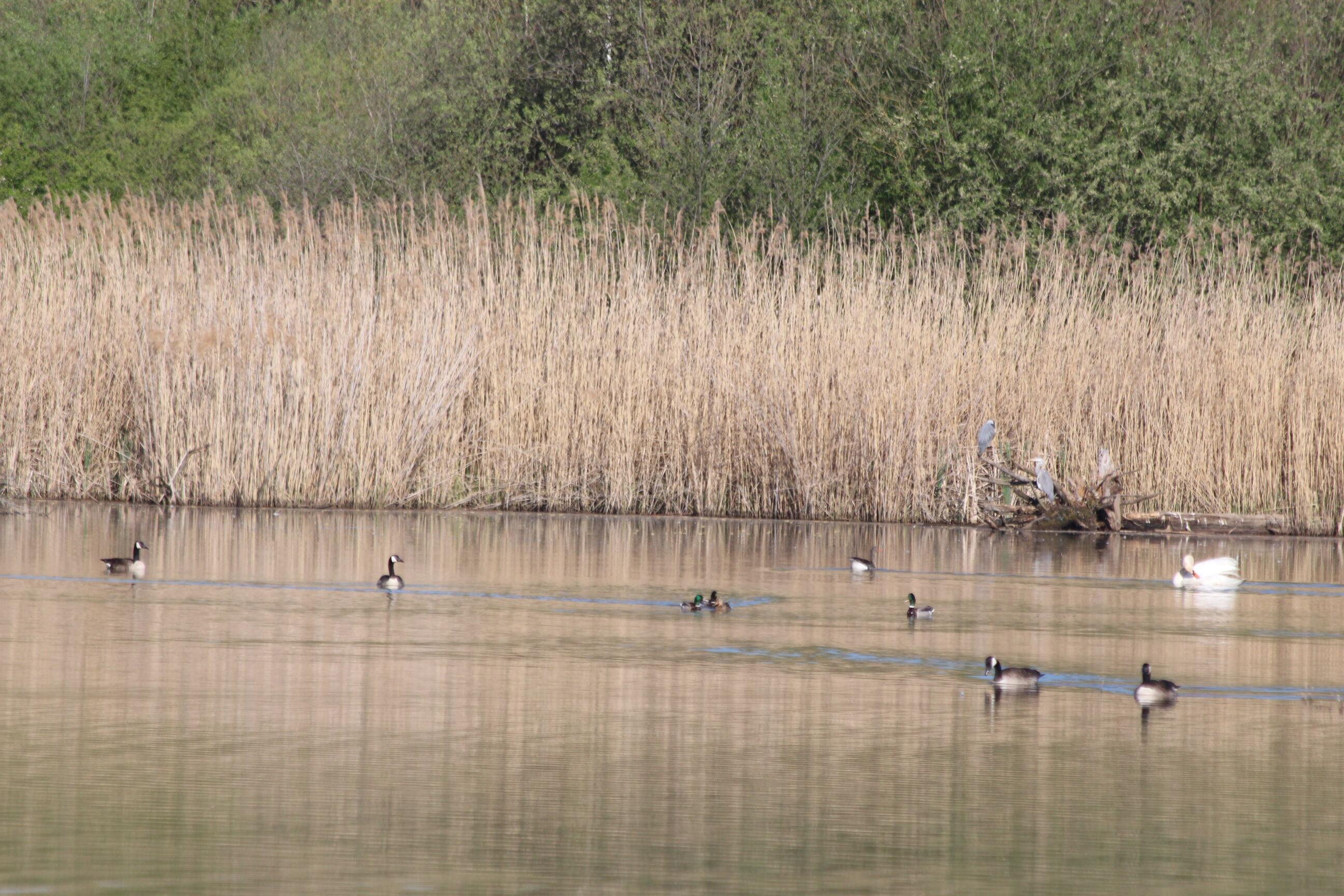 Die Vogelwelt im LIFE-Natur-Gebiet ist vielfältig. Foto: Umweltstation Weismain