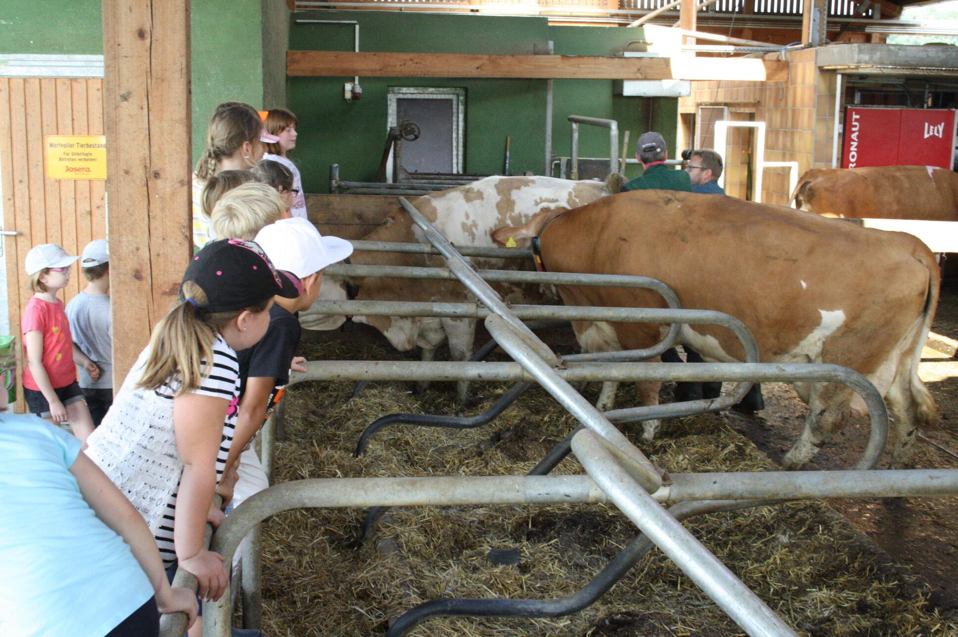 Eine Ferienwoche auf dem Bauernhof bieten Umweltstation Weismain und Kommunale Jugendarbeit an. (Foto Umweltstation Weismain/Michael Stromer)
