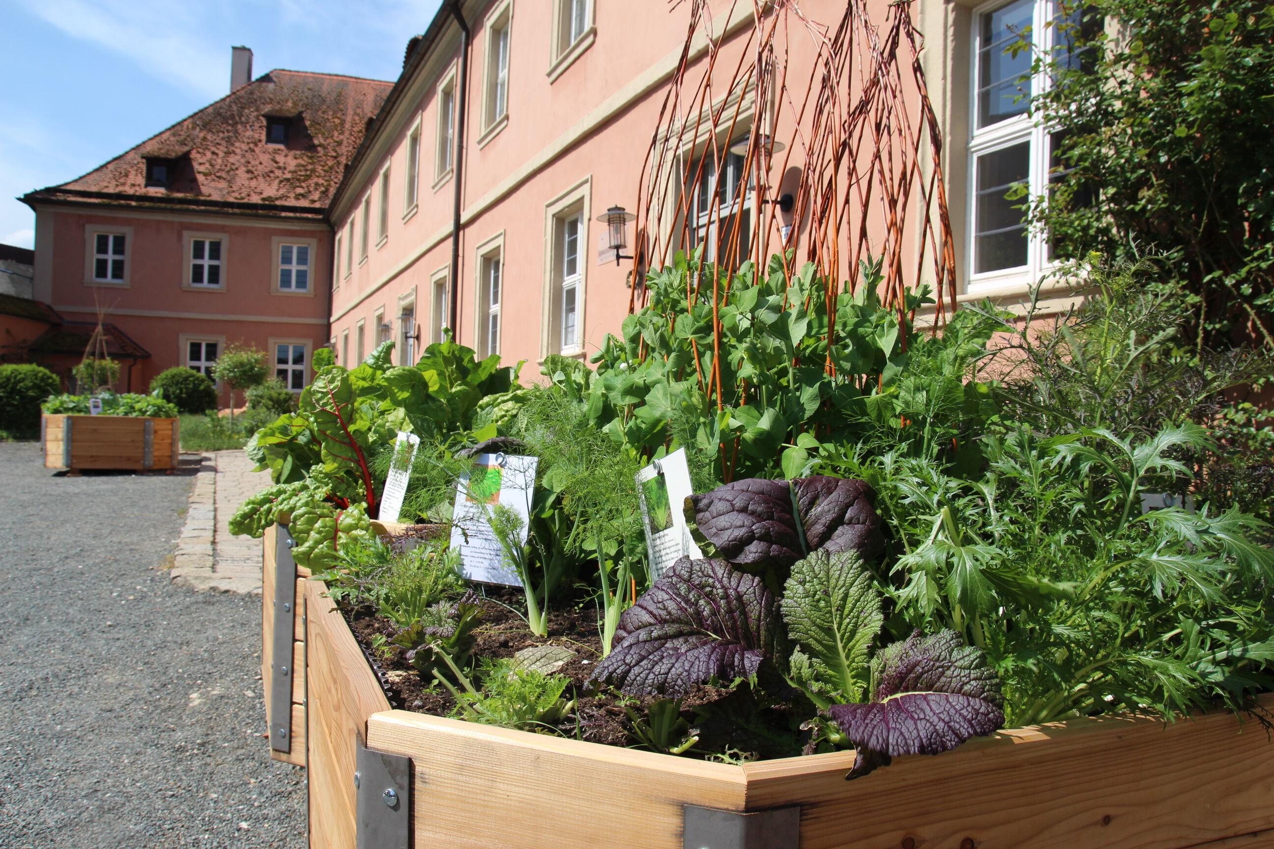 In den Hochbeeten an der Umweltstation des Landkreises Lichtenfels in Weismain wachsen verschiedene Gemüsesorten. Foto: Umweltstation Weismain