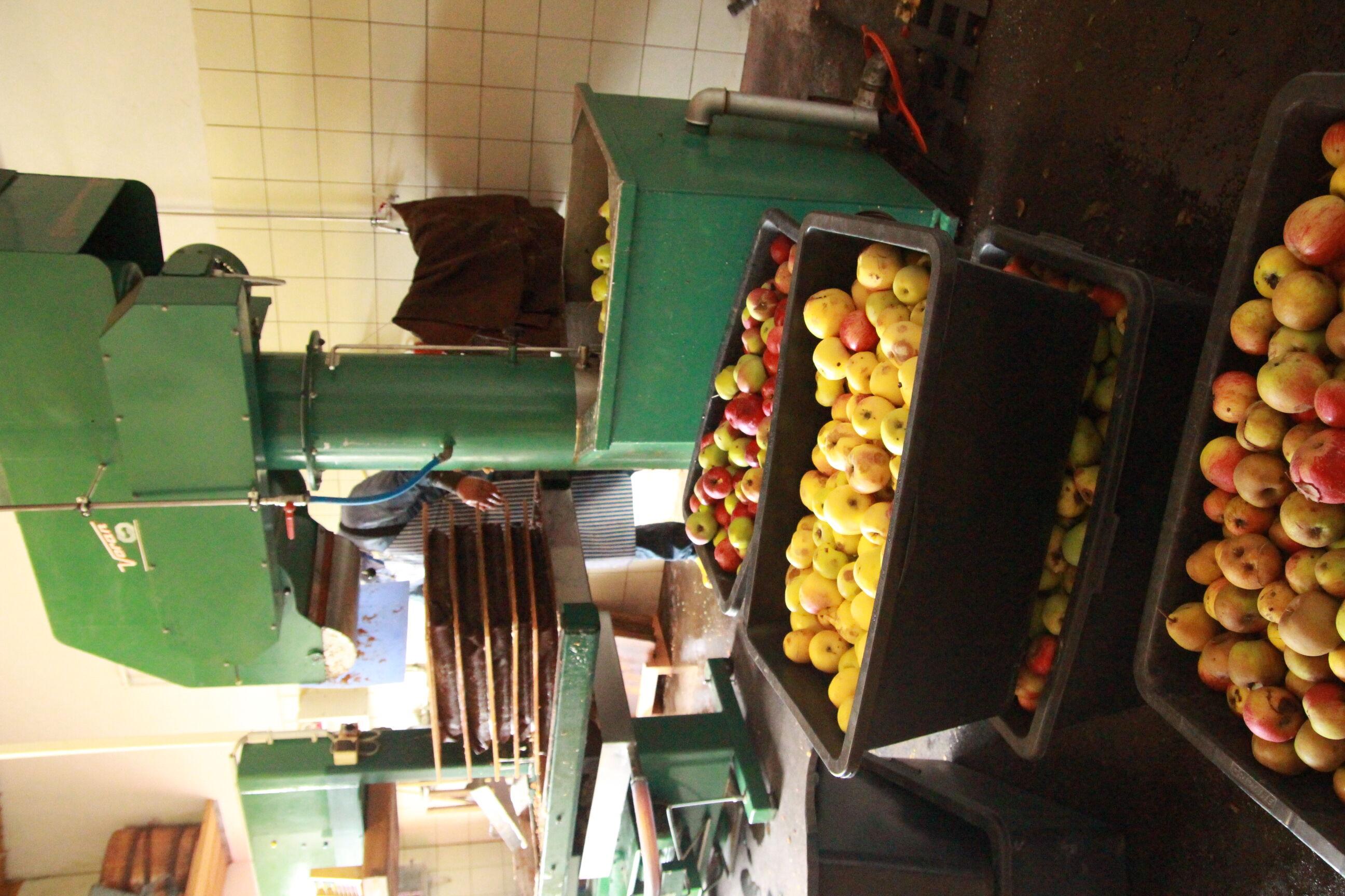 Diese Äpfel warten im Marktgraitzer Kelterhaus auf die Versaftung in der Platten-Pressanlage des Obst- und Gartenbauvereins. Foto: Umweltstation Weism