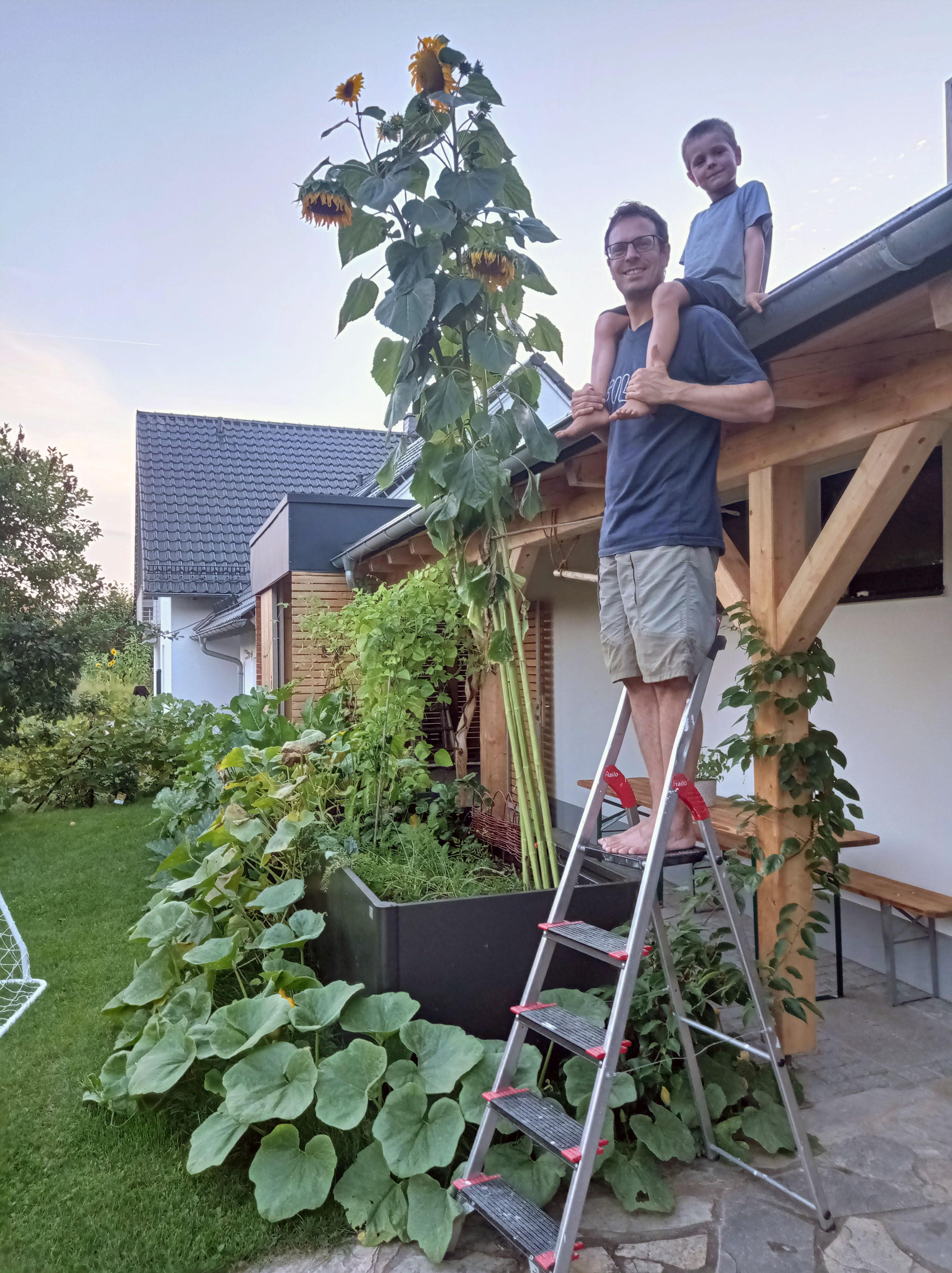 Aus vielen Gräten grüßen oft meterhohe Sonnenblumen - wie hier im Garten der Familie Fugmann in Oberwallenstadt. Foto: Umweltstation Weismain/Michael