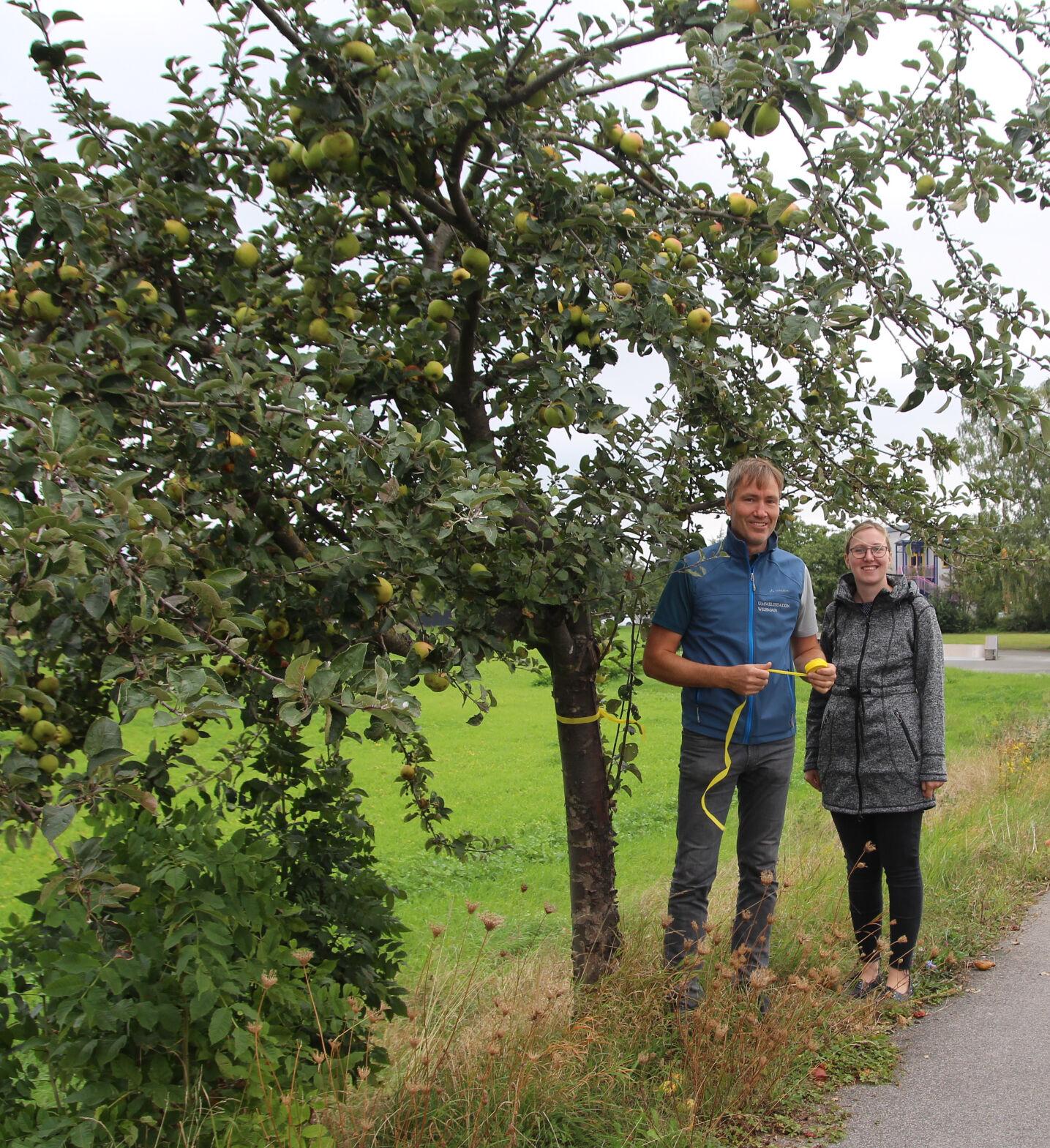 Bianca Faber von der Öko-Modellregion Obermain-Jura und Michael Stromer von der Umweltstation des Landkreises werben für das gelbe Band an Obstbäumen