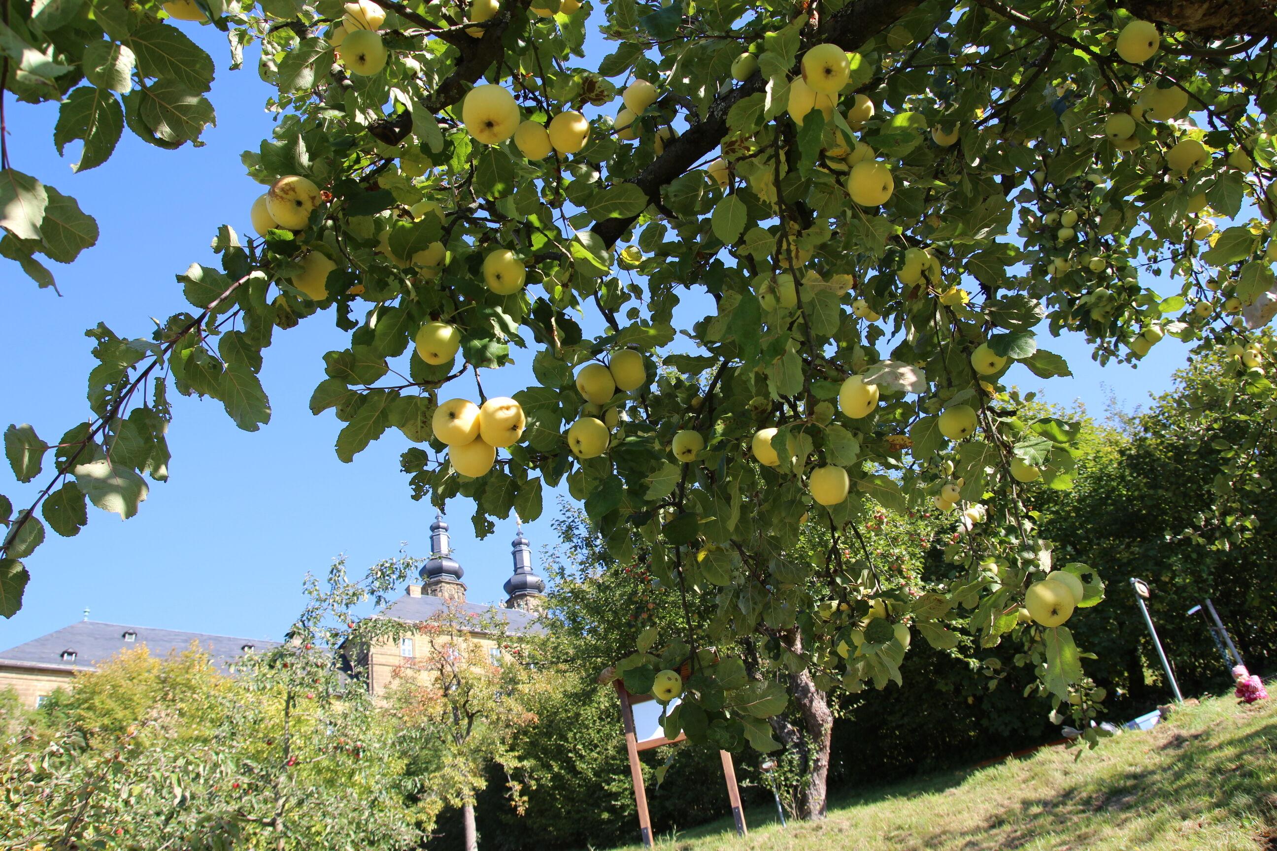 Nach der Expertenführung in Kloster Banz folgt bei der Erlebnistour ein Besuch auf der Streuobstwiese mit einem gemeinsamen Picknick.  Foto: Landratsa