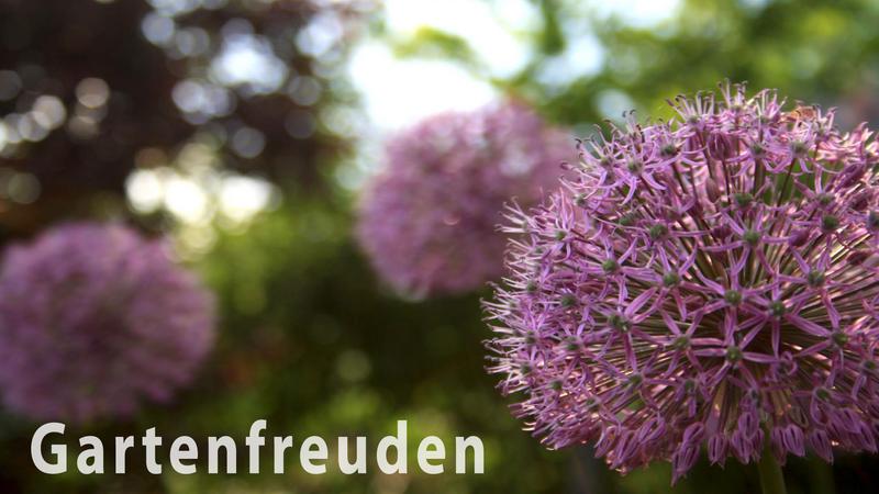Header Gartenfreuden-01