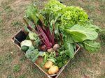Miniaturbild zu:Pressemitteilung 328-2020: Gemüse – AUS der Region FÜR die Region