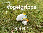 Miniaturbild zu:Fragen zur Vogelgrippe