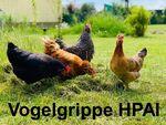 Miniaturbild zu:Vogelgrippe / Geflügelpest HPAI im Landkreis Lichtenfels