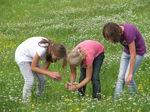 Miniaturbild zu:Pressemitteilung 163-2021: Natur am Neuenseer Weiher im Fokus