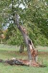 Miniaturbild zu:Pressemitteilung 383-2019: Umweltipp: Totholz als Paradies für seltene und gefährdete Arten