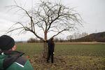 Miniaturbild zu:Pressemitteilung 073-2020: Der richtige Schnitt für Obstbäume
