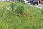 116 - 2020_04_20_PM Umwelttipp_Blumenwiese statt Rasen 1