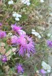 Miniaturbild zu:Umwelttipp 05-2020: Blumenwiese statt Rasen, Teil 2