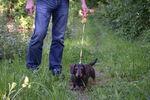 Miniaturbild zu:Pressemitteilung 168-2020: Im Vogelschutzgebiet müssen Hunde an die Leine