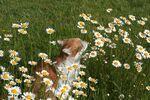 Miniaturbild zu:Pressemitteilung 170-2020: Kater Mecki liebt die Blumen