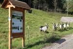 Miniaturbild zu:Schlauwienix - Natur-Kultur-Lehrpfad am Kordigast