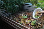 Miniaturbild zu:Umwelttipp 08-2020: Kompost – das schwarze Gold des Gärtners