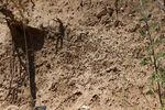 So eine Sandwand ist das natürliche Brut- und Überwinterungs-Revier der Wildbienen. Foto Michael Stromer