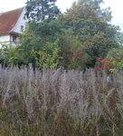 Was aussieht wie eine ungepflegte Gartenwiese im Oktober, ist für die Insekten und andere Tiere ein Paradies. (Foto: Michael Stromer)
