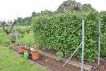 Miniaturbild zu:Gartentipp 02-2021: Die Obsthecke im Garten