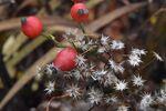 Miniaturbild zu:Gartentipp 14-2020: Adventsschmuck aus Naturmaterialien