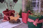 Miniaturbild zu:Gartentipp 015-2021: Pflanzen als Weihnachtsgeschenke