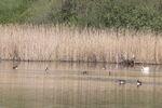 Miniaturbild zu:Pressemitteilung 181-2021: Vogelwelt im LIFE-Natur-Gebiet im Blick