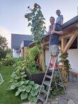 Miniaturbild zu:Pressemitteilung 293-2021: Sonnenblumen grüßen aus den Gärten