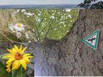 Miniaturbild zu:Pressemitteilung 295-2021: Auf den Spuren von Natura 2000