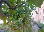 Miniaturbild zu:Pressemitteilung 323-2021: Blick über den Zaun: Obst im Fokus