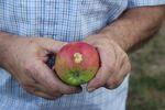 Miniaturbild zu:Pressemitteilung 342 - 2021: Dankbarkeit für die Früchte des Gartens