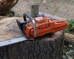 Miniaturbild zu:Ausschreibung Baumpflegemaßnahmen 2020